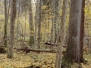 Bialowieza primeval forest