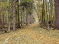 Forêt primaire de Bialowieza