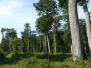 Forest of Tronçais